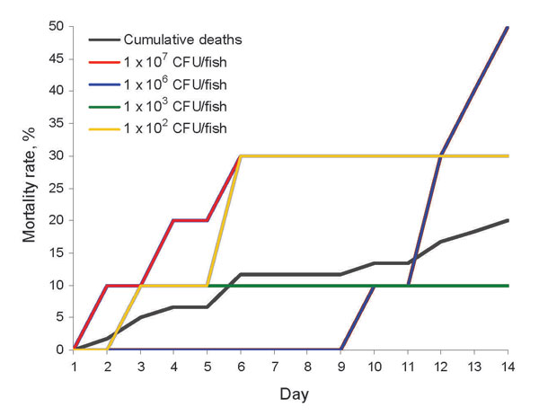 Mortality rates for 60 Nile tilapia at all doses (black line) and 10 tilapia each challenged with a human Streptococcus agalactiae isolate (#510012): 102 (gray line), 103 (green line), 106 (red line), and 107 (blue line) CFU/fish. No deaths occurred at 104 and 105 CFU/fish or in tryptic soy broth controls.