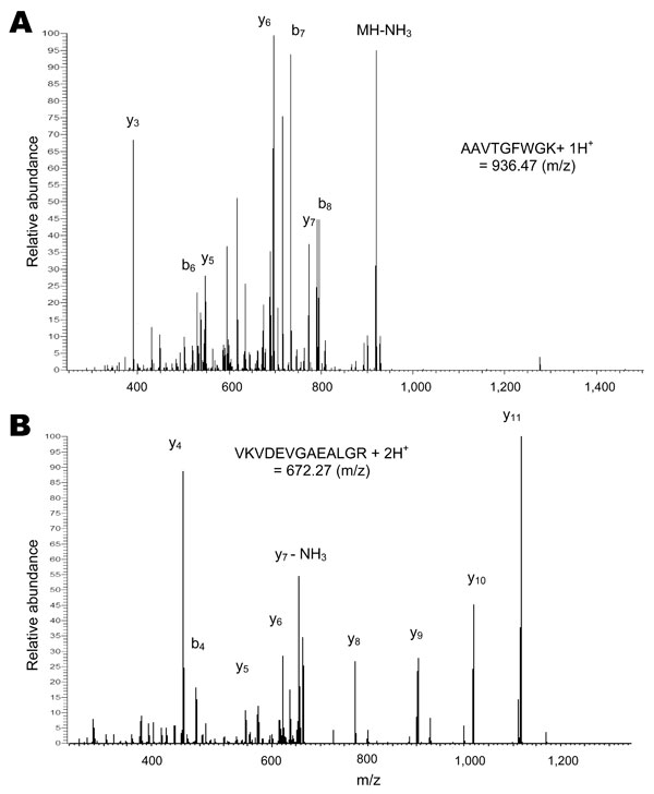 Tandem mass spectra of 2 peptides from sheep hemoglobin β-subunit identified in a nymph of an Amblyomma americanum tick. A) Singly protonated AAVTGFWGK. B) Doubly protonated VKVDEVGAEALGR. The peaks are labeled in the conventional manner: b ions include the N-terminus of the peptide and y ions include the C-terminus, with subscripts indicating the number of amino acid residues in the fragment.