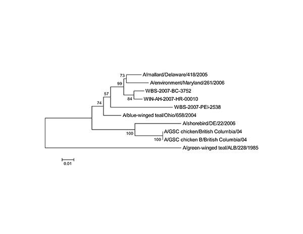 Phyogenetic analysis of avian influenza virus H7 (A) and N3 (B) genes. Trees were generated with MEGA software (8) by using the neighbor-joining method (9). Evolutionary distances were computed by using the method of Nei and Gojobori (10). Percentage of replicate trees in which the associated taxa clustered together in the bootstrap test (1,000 replicates) is shown next to the branches. Scale bars indicate substitutions per site.