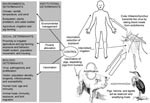 Thumbnail of Contextual determinants and transmission of Japanese encephalitis.