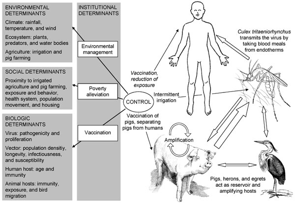Contextual determinants and transmission of Japanese encephalitis.
