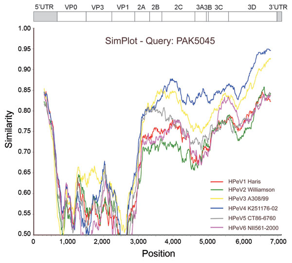 SimPlot (http://sray.med.som.jhmi.edu/SCRoftware/simplot) analysis of the full-length sequences of the human parechovirus (HPeV) prototypes against PAK5045 query, based on nucleotide similarities. Each curve compares the PAK5045 genome with an HPeV prototype. The Kimura 2-parameter model was applied with a transition/transversion (Ts/Tv) ratio of 3.0 (5), and a sliding window of 600 nt with a step size of 10 nt was used.