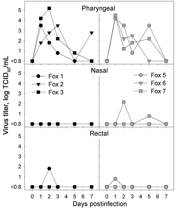 Infectious virus titers obtained from pharyngeal, nasal, and rectal swabs of foxes infected intratracheally with highly pathogenic avian influenza (HPAI) virus (H5N1) (left, black symbols) or fed chicks infected with HPAI virus (H5N1) (right, gray symbols) at various time points after infection. No virus was isolated from any swabs of the negative-control foxes. TCID50, median tissue culture infectious dose.