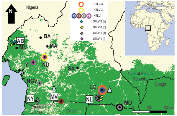 Distribution of primate T-lymphotropic viruses identified in humans and nonhuman primates from rural villages and forests in southern Cameroon. Colored circles and diamonds correspond to human (HTLVs) and simian T-lymphotropic viruses (STLVs) (subtypes), respectively, found at each study site in the current study and reported previously (7). Shaded triangles indicate approximate sampling sites where STLV-3–like strains have been reported by others (9). The 4 locations where Old World monkey and