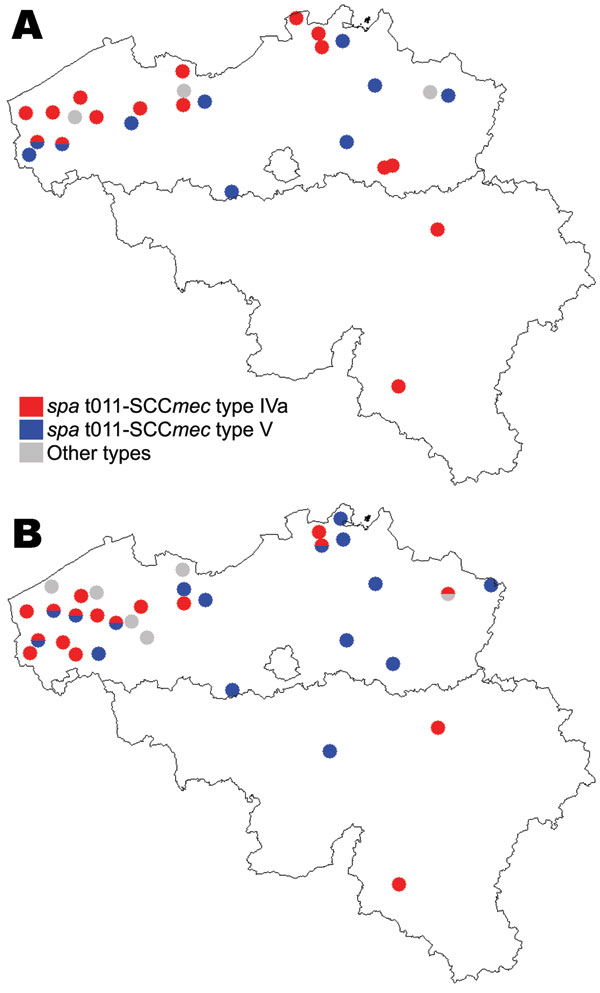 Distribution, by farms, of epidemic methicillin-resistant Staphylococcus aureus strains of spa type t011-SCCmec type IV, t011-SCCmec type V, and other types, Belgium, 2007. A) Farm residents and workers; B) Pigs. SCC, staphylococcal cassette chromosome.