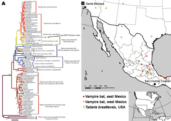 Phylogenetic tree of complete lyssavirus nucleoprotein genes, comparing the patient isolate with representative rabies virus variants associated with common New World animal reservoirs. The map shows the locations of representative samples associated with rabies transmitted by Tadarida brasiliensis and vampire bats used in the analysis.