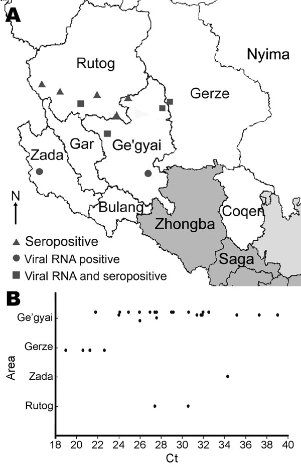 A) Distribution of outbreaks of peste des petits ruminants disease in Tibet, China, 2007. Triangles indicate outbreaks confirmed by ELISA. Circles indicate outbreaks confirmed by reverse transcription–PCR (RT-PCR) and quantitative RT-PCR. Squares indicate outbreaks confirmed by ELISA and molecular methods. B) Cycle threshold (Ct) values (determined by use of q-RT-PCRs on samples) by county.