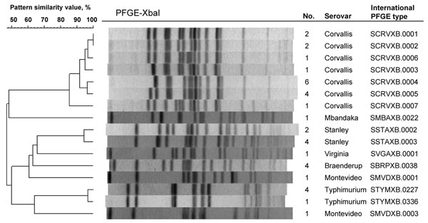 Dendrogram showing the clonal relationships among 36 isolates of Salmonella enterica collected from travelers returning to Finland from Thailand or Malaysia, 2003–2007. These isolates showed the nonclassical quinolone resistance phenotype (i.e., reduced susceptibility to ciprofloxacin [MIC >0.125 µg/mL] and susceptibility or low-level resistance to nalidixic acid [MIC <32 µg/mL]). No., number of Salmonella isolates belonging to a certain pulsed-field gel electrophoresis (PFGE) pattern.