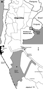 Thumbnail of A) Location of study area in the lower Paraná River Delta of Argentina. B) Tick collection sites along the Paraná River (dark circles) and a recently reported case of eschar-associated rickettsiosis (open circle) identified by clinicians in Buenos Aires Province, Argentina (7).