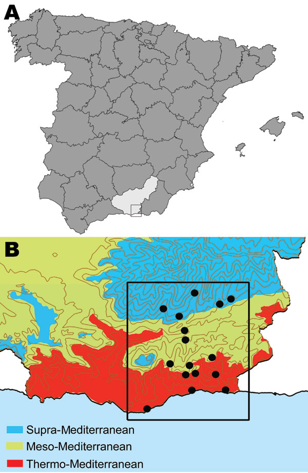 A) Location of the Alpujarras in southeastern Spain (37º00'–37º20'N and 3º00'–3º30'W). B) Bioclimatic levels (shading) and villages (black dots) where serum samples were collected from dogs to examine for leishmaniasis prevalence and sandflies were collected to estimate densities, April–June 2006. Of 1,675 sandflies captured, 269 were identified by morphologic appearance as Phlebotomus perniciosus (density 0–165 specimens/m2) and 22 as P. ariasi (0 and 11 specimens/m2).