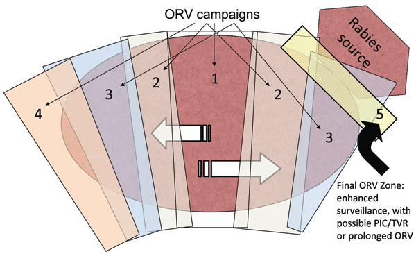 Expanding-wedge tactic with progressive elimination (9). Numbers represent successive oral rabies vaccination (ORV) zones. Potential savings are assumed for the area of progressive elimination, southern Ontario Province. The rectangle bordering the rabies source (i.e., 5) highlights an area of enhanced surveillance, possible point infection control (PIC) activities, trap–vaccinate–release (TVR) activities, or an ORV zone intended to deter future reemergence of the virus.