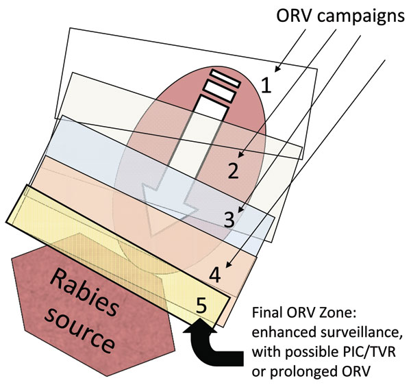 Collapsed-bands tactic with progressive elimination (17). Numbers represent successive oral rabies vaccination (ORV) zones that attempt to collapse the baited area, exclude virus incursion outside, and lead to a maintenance zone that prevents reintroduction of the disease after the current population matures and vaccination effects are lost. Potential savings are assumed to occur within the ORV areas and for assumed distances beyond the zone. The rectangle bordering the rabies source (i.e., 5) highlights an area of enhanced surveillance, possible point infection control (PIC) activities, trap–vaccinate–release (TVR) activities, or an ORV zone intended to deter future reemergence of the virus.