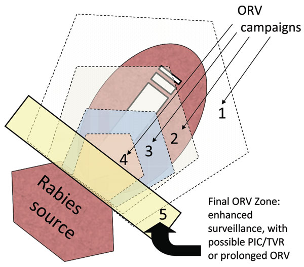 Purse string–like tactic with progressive elimination (17). Numbers represent successive oral rabies vaccination (ORV) zones that attempt to roughly encircle and shrink the baited area, exclude virus incursion from outside, and lead to a maintenance zone that prevents reintroduction of the disease after the current population matures and vaccination effects are lost. Potential savings are assumed to occur within the ORV areas and for assumed distances beyond the outer zone. The rectangle bordering the rabies source (i.e., 5) highlights an area of enhanced surveillance, possible point infection control (PIC)/trap–vaccinate–release (TVR) activities, or an ORV zone intended to deter future reemergence of the virus.