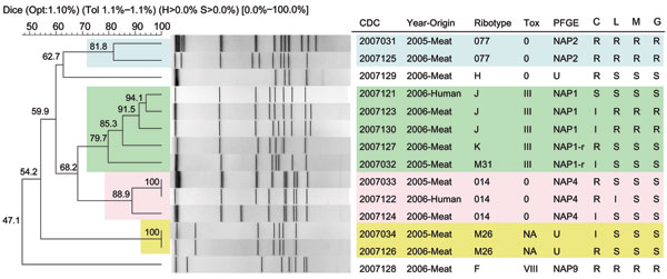 Pulsed-field gel electrophoresis (PFGE)–SmaI dendogram of Clostridium difficile isolates of meat and human origin in Canada. Representative PCR ribotypes 077, 014, M31, and M26 are of meat origin from 2005 (4,11). PCR ribotype designations are described in Table 2. Note the genetic similarity (94.1%–100%) and antimicrobial resistance profiles between human and meat isolates, especially PCR ribotypes 014 and J. Also note the genetic similarity (81.8%–100%) between meat isolates from 2005 and 2006