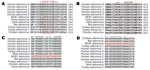 Thumbnail of Astrovirus open reading frame (ORF) 1b alignments for design of pan-astrovirus primers. Astrovirus RNA polymerase sequences (ORF1b) were aligned at the amino acid level to define the conserved regions used for the design of primers SF0073 (A) and SF0076 (B). The numbers to the right of the sequences indicate the position of the last amino acid within each ORF1b sequence. Red boxes represent the specific regions that were reverse translated into the corresponding nucleic acid sequenc