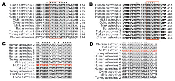 Astrovirus open reading frame (ORF) 1b alignments for design of pan-astrovirus primers. Astrovirus RNA polymerase sequences (ORF1b) were aligned at the amino acid level to define the conserved regions used for the design of primers SF0073 (A) and SF0076 (B). The numbers to the right of the sequences indicate the position of the last amino acid within each ORF1b sequence. Red boxes represent the specific regions that were reverse translated into the corresponding nucleic acid sequences used for t