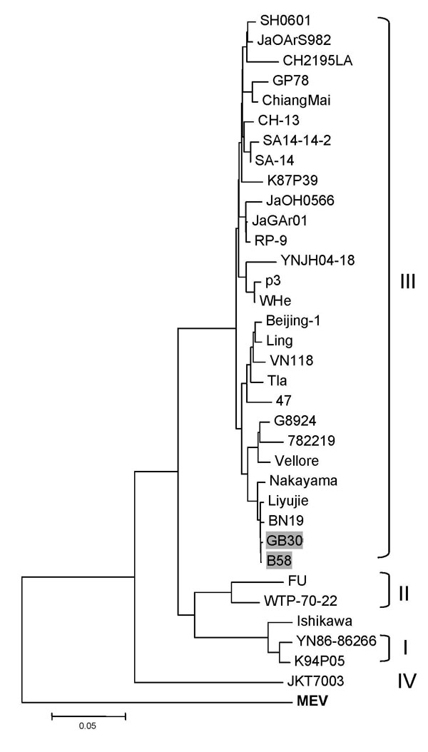 Phylogenetic tree based on the envelope (E) protein gene of selected Japanese encephalitis virus strains. Murray Valley encephalitis virus (MEV) E gene (in boldface) was used as an outgroup. Genotypes are indicated on the right. The 2 bat virus isolates used in this study are indicated by shading. Scale bar indicates number of nucleotide substitutions per site. See Table 1 for more details of the strains used in this analysis and their GenBank accession numbers.