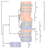 Thumbnail of Neighbor-joining phylogenetic tree of 60 specimens of rabies virus from the People's Republic of China, 2005–2007, based on a 720-nt (nt 704–nt 1423) nucleoprotein (N) gene fragment of rabies virus rooted with the Pasteur strain of rabies virus (PV). Numbers at each node indicate degree of bootstrap support; only those with support >70% are indicated. Taxa are from Hunan Province are shown in red, taxa are from Guangxi Province in black, and taxa are from Guizhou Province in blue