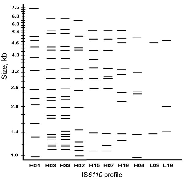 Insertion sequence (IS)6110 profiles of the 10 largest Mycobacterium tuberculosis clusters, Houston Tuberculosis Initiative, Texas, 1995–2004.