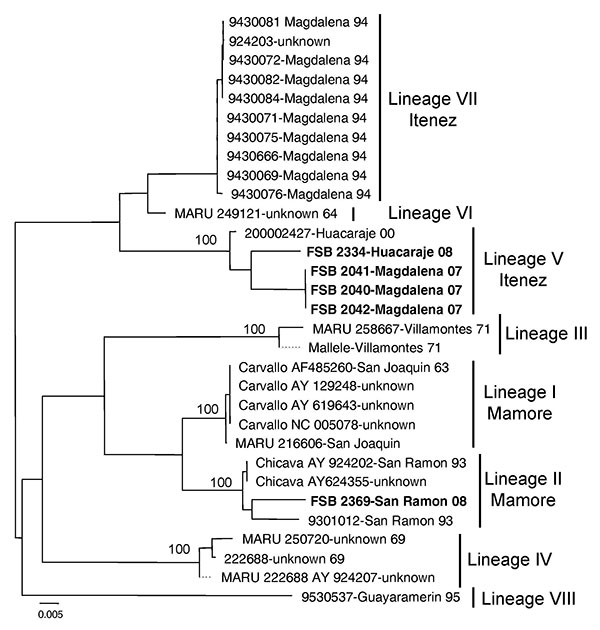 Neighbor-joining phylogenetic tree of Machupo virus derived from the glycoprotein precursor gene sequence. The neighbor-joining and maximum likelihood analyses yielded similar phylogenetic trees. Boldface indicates 2007–2008 isolates. Numbers indicate bootstrap values for 1,000 replicates. Scale bar indicates nucleotide substitutions per site.