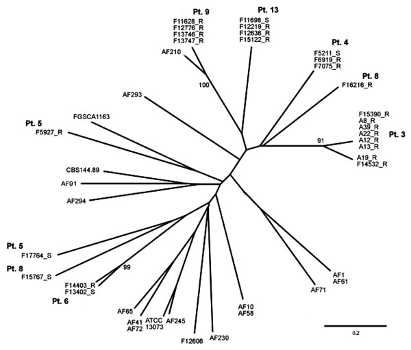 Unrooted phylogenetic tree showing the genetic relationship of isolates from 7 patients.The genetic relationship of these isolates is shown in relation to each other and to 18 other isolates. AF numbers belong to a collection of >200 isolates, held in Manchester, UK. ATCC, American Type Culture Collection; CBS, Centraalbureau voor Schimmelcultures; FGSC, Fungal Genetics Stock Center. Bootstrap values >90 only are shown. Scale bar indicates nucleotide substitutions per site.
