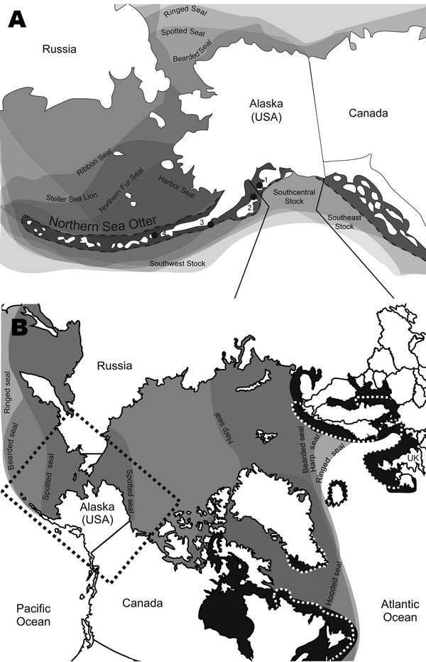 Distribution of Arctic and sub-Arctic pinnipeds in relation to Arctic ice coverage representing a unique area where distribution ranges of multiple seal species overlap (7,8). A) North Pacific Ocean region showing the range of the northern sea otter (Enhydra lutris kenyoni) in Alaska, its population stock delineations, and sample collection locations for the study. 1, Kachemak Bay; 2, Kodiak Archipelago; 3, South Alaska Peninsula; 4, Fox Island; seal species ranges overlap. This overlap indicate