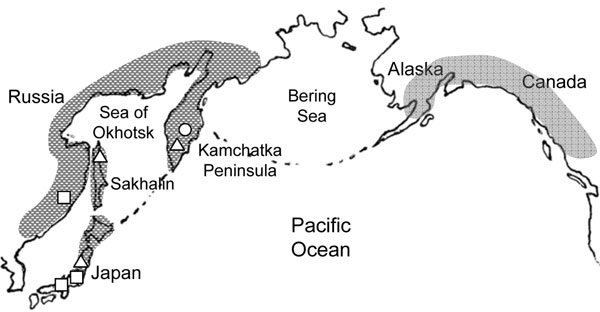 Possible distribution area of Diphyllobothrium nihonkaiense. Open circle, open square, and open triangle represent brown bears, humans, and Pacific salmon, respectively, from which D. nihonkaiense adult worms or plerocercoids were isolated and identified by DNA sequencing (DNA sequences refer to reference 21). Patients in European countries are suspected to have eaten salmon imported from the Pacific coast of North America.