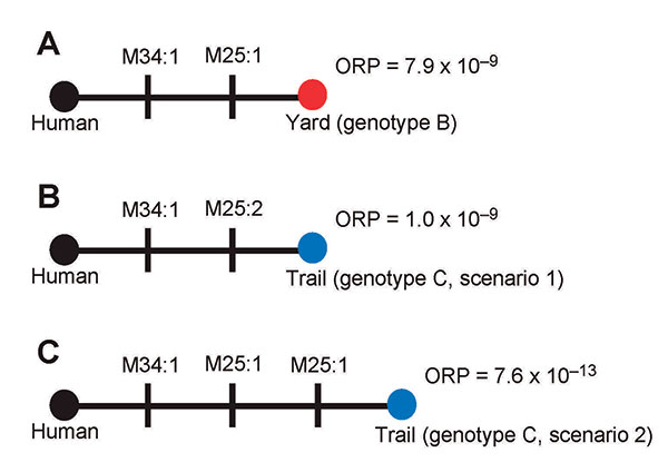 Alternate infection source hypotheses for the plague cases in the persons who visited New York, New York, USA. Closed circles indicate genotypes; black, red, and blue circles indicate genotypes A, B, and C, respectively. Individual mutations are indicated as vertical lines on the comparisons and are labeled with the locus that mutated and the number of repeats involved in the mutations. Overall relative probabilities (ORP) based on Yersinia pestis mutation rates are presented for each comparison