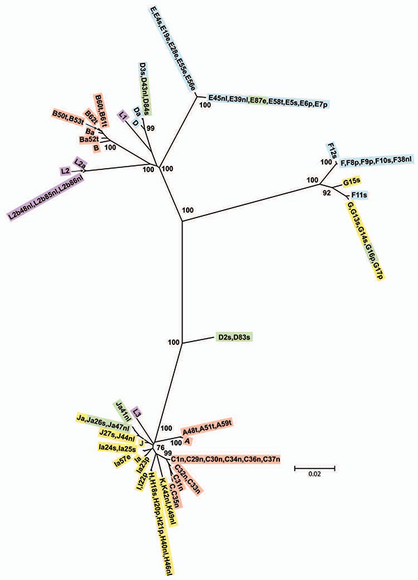 Minimum evolution tree for ompA. The tree was constructed using the matrix of pairwise differences between the 87 sequences by using the maximum composite likelihood method for estimating genetic distances. Numbers are bootstrap values (1,000 replicates) >70%. Lavender, invasive lymphogranuloma venereum (LGV); gold, noninvasive, nonprevalent sexually transmitted infection (STI) strains; red, trachoma strains; blue, noninvasive, highly prevalent STI strains; green, putative recombinant stains.