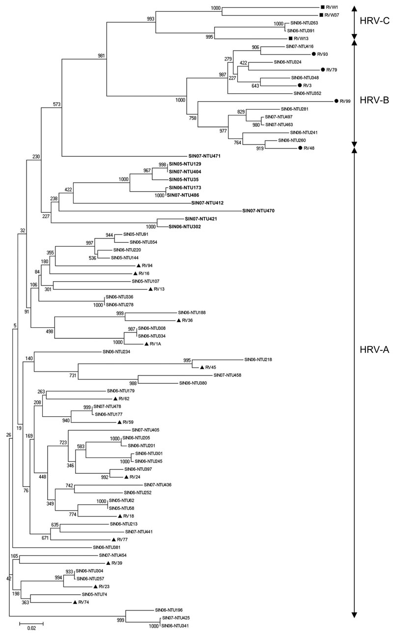 Phylogenetic analysis of human rhinoviruses (HRVs) from Singapore based on nucleotide sequences of the 5′ noncoding region. The tree was constructed by using the neighbor-joining method with 1,000 bootstrapped replicates generated by MEGA version 4 software (9). Sequences (GenBank accession nos. FJ645828–FJ645771) of viruses from Singapore (SIN) are indicated, where the 2 numbers represent the year the specimen was collected, and NTU (Nanyang Technological University) followed by 3 numbers represents the specimen number. Representative strains of HRV-C are indicated by squares, HRV-B by circles, and HRV-A by triangles. RV indicates rhinovirus strains, followed by the serotype no. These sequences were obtained from the report by Lee et al. (3). Boldface indicates a cluster of 10 HRV-A strains that diverged from reference HRV-A strains. Scale bar indicates nucleotide substitutions per site.