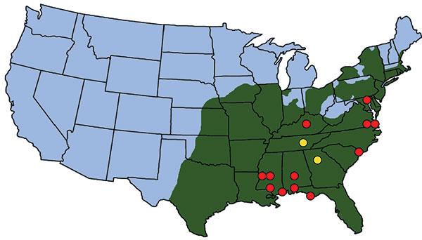 Location of ticks, Rickettsia parkeri in ticks, and human cases of rickettsiosis in the United States. Green shading indicates approximate distribution of Amblyomma americanum ticks, which completely overlaps with the known or suspected distribution of A. maculatum. Yellow circles indicate locations where R. parkeri was detected in A. americanum ticks (this study). Red circles indicate locations of confirmed or suspected cases of R. parkeri infection in humans (11).