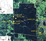 Thumbnail of Satellite image of collection sites of hantavirus RNA–positive rodents, including selected Juquitiba virus (circles) and Jaborá virus (triangles) samples, Paraguay, 2003–2007. Inset shows location of showing the study site in Paraguay. OLFO, Oligoryzomys fornesi; OLNI, O. nigripes; OLSP, Oligoryzomys sp.; AKMO, Akodon montensis.