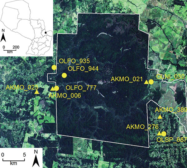 Satellite image of collection sites of hantavirus RNA–positive rodents, including selected Juquitiba virus (circles) and Jaborá virus (triangles) samples, Paraguay, 2003–2007. Inset shows location of showing the study site in Paraguay. OLFO, Oligoryzomys fornesi; OLNI, O. nigripes; OLSP, Oligoryzomys sp.; AKMO, Akodon montensis.