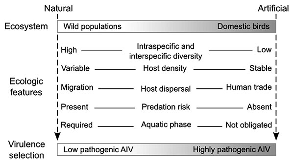Comparison of natural versus artificial ecosystems showing different ecologic constraints for evolution of avian influenza virus (AIV).