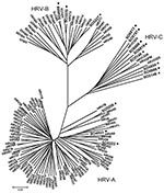 Thumbnail of Phylogenetic analysis of 5′ noncoding region and viral protein (VP) 4/2 coding region of 9 human rhinoviruses (HRVs) identified in infants with apparently life-threatening events in Spain, November 2004–December 2008. Phylogeny of nucleotide sequences (≈492 bp) was reconstructed with neighbor-joining analysis by applying a Jukes-Cantor model; scale bar indicates nucleotide substitutions per site. Included for reference are sequences belonging to the novel genotype reported previousl