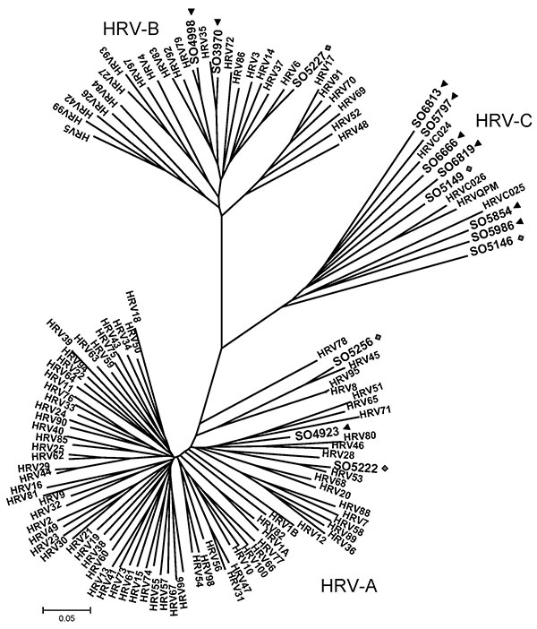 Phylogenetic analysis of 5′ noncoding region and viral protein (VP) 4/2 coding region of 9 human rhinoviruses (HRVs) identified in infants with apparently life-threatening events in Spain, November 2004–December 2008. Phylogeny of nucleotide sequences (≈492 bp) was reconstructed with neighbor-joining analysis by applying a Jukes-Cantor model; scale bar indicates nucleotide substitutions per site. Included for reference are sequences belonging to the novel genotype reported previously (QPM and 02