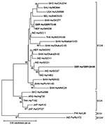 Thumbnail of Phylogenetic dendrogram of viral protein 7 (VP7) of G12 rotavirus at the amino acid level. Bootstraps values (1,000 replicates) >65% are shown. The strain name is prefixed by the country of origin (ARG, Argentina; BAN, Bangladesh; BEL, Belgium; GER, Germany; IND, India; JAP, Japan; NEP, Nepal; PHI, Philippines; SAU, Saudi Arabia; SKO, South Korea; THA, Thailand; USA, United States of America) as well as the viral host (Hu, human, Po, porcine). Boldface indicates strains of this s