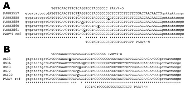 Alignment of parvovirus 4 (PARV4) sequences showing the location of the 2 probes used in the real-time experiments. A) Partial sequences used for the design of probe PARV4-N: PARV4 prototype isolate (AY622943) and in-house PCR products characterized initially (GenBank accession nos. FJ883557–61). B) Examples of point mutations located on the PARV4-O recognition site identified in amplicons originating from samples positive with PARV4-N assay. Mismatches identified in the alignments are underline