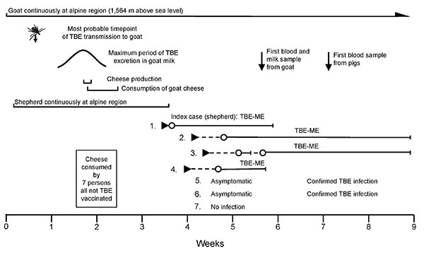 Time course and series of events of a tick-borne encephalitis (TBE) outbreak from cheese made with goat milk. Week 0, transport of goat to high altitude; ►, onset of disease; O—I, hospitalization period; TBEV, tick-borne encephalitis virus; ME, meningoencephalitis.