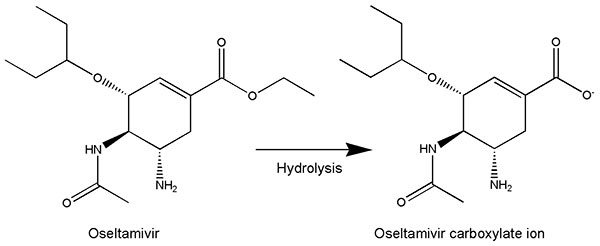 Metabolic activation of oseltamivir to carboxylic acid.