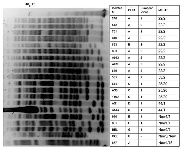 Pulsed-field electrophoresis (PFGE) profiles of ApaI-digested genomic DNA from strains of Acinetobacter baumannii. PFGE types, European clone types, and multilocus sequence typing (MLST) results are shown. *ST, sequence type determined by Bartual et al. (19) compared with ST determined by Nemec et al. (20). Lane M, molecular size markers (48.5 kb).