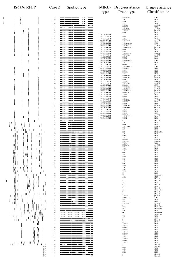 Genotype and phenotype classification drug-resistant isolates from each case-patient. Insertion sequence (IS) 6110 DNA fingerprints of a single Mycobacterium tuberculosis isolate from 122 case-patients, South Africa, 2003-2005 are shown. Spoligotype patterns from 126 case-patients are shown. Isolated from 74 case-patients were grouped into 11 clusters (4 clusters had 2 cases, 4 clusters had 3 cases, 1 cluster had 4 cases, 1 cluster had 8 cases and 1 cluster had 42 cases). Mycobacterial intersper