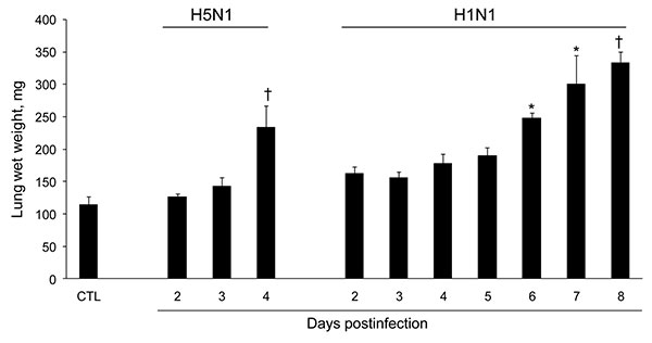 Effect of influenza A virus subtype H5N1 and H1N1 strains on lung weight after intranasal inoculation of 10× the 50% mouse lethal dose on day 0. Absolute values are given as means ± SD for 5 mice at each time point. For each virus strain, means significantly different from those of control (CTL) lungs are indicated (nonparametric Mann-Whitney test). *p<0.05; †p<0.01.