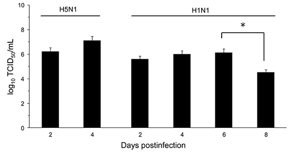 Effect of influenza A virus subtype strains H5N1 and H1N1 on lung virus titers 2–8 days after intranasal inoculation of 10× the 50% mouse lethal dose on day 0. Titers are expressed as the log10 median tissue culture infectious dose (TCID50) units per milliliter of lung homogenate. Significantly different titers are indicated (nonparametric Mann-Whitney test). Error bars indicate SD calculated from individual virus titers. *p <0.05.