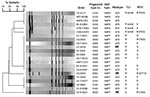 Thumbnail of Dendrogram analysis of macrorestriction patterns (SmaI) of the NAP7 and NAP8 Clostridium difficile strains isolated from the patients listed in Table 2. C. difficile N07-00380 is a ribotype 078 control strain. C. difficile NAP7-CDC and NAP8-CDC control strains are toxinotype V. Isolates exhibiting high-level clindamycin resistance (>256 μg/mL) and harboring ermB are indicated. The amino acid change found in the gyrA protein is shown for the moxifloxacin-resistant strain antimicro