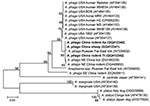 Thumbnail of Phylogenetic tree based on partial (348-bp) gltA sequences of Anaplasma spp., obtained by using neighbor-joining method with Kimura 2-parameter analysis and bootstrap analysis of 1,000 replicates. Numbers on the branches indicate percentage of replicates that reproduced the topology for each clade. Parentheses enclose GenBank numbers of the sequences used in the phylogenetic analysis. Boldface indicates sequences obtained from rodents and sheep from northeastern China, May 2009. Sca