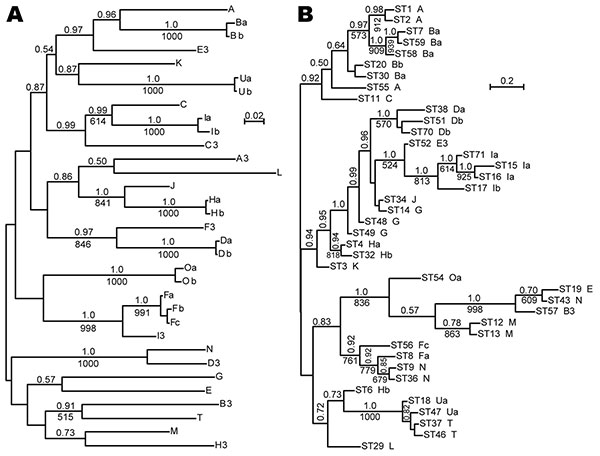 A) Bayesian and maximum-likelihood phylogenetic inference of outer surface protein C (ospC) gene sequences and B) concatenated multilocus sequence typing (MLST) sequences of Borrelia burgdorferi. Sequences were aligned by codon. Labels at the tips refer to ospC alleles (A) or MLST (ST) and linked ospC alleles (B; Table). Consensus phylograms were the output of the MrBayes version 3.1.2 algorithm (http://mrbayes.csit.fsu.edu). There were 500,000 generations with the first 1,000 discarded. Nodes w