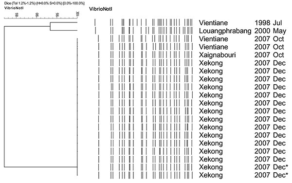 Dendrogram for NotI-digested pulsed-field gel electrophoresis profiles of Vibrio cholerae isolates, Laos, December 2007–January 2008. Origin of each isolate is shown on the right. *Water sample.