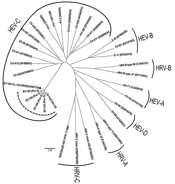 Phylogenetic analysis of the viral protein (VP) 4/VP2 region of the 5 enterovirus 104 (EV-104) strains belonging to the human enterovirus C (HEV-C) species (delimited by circular dotted line), along with the reference strain from Switzerland (GenBank accession no. EU840733). Prototype strains are also reported for the different HEV and human rhinovirus (HRV) species. CV, coxsackievirus; E, echovirus; PV, poliovirus. Scale bar indicates nucleotide substitutions per position.