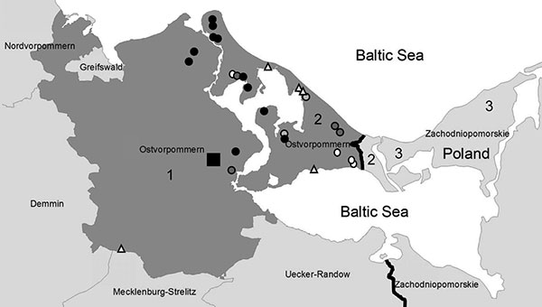 Region in Germany and Poland investigated for Trichinella spp. 1, Ostvorpommern, Germany; 2, Usedom Island, Germany; 3, Wolin Island, Poland. Triangles, Trichinella spp.–positive cases in raccoon dogs; circles, cases in wild boars; square, location of outbreak farm; white circles and triangles, cases in 2005; light gray circles, cases in 2006; dark gray circles, cases in 2007; black circles, cases in 2008.